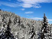 Snowy Trees — Stock Photo