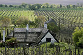 Vineyards and Farmhouse at Lake Balaton — 图库照片