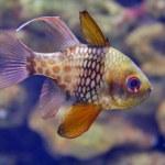 Aquarium fish — Stock Photo