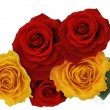 Red and yellow roses — Stock Photo #3345117