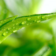 Grass covered dew — Stock Photo #3345486
