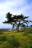 Tree at Cape Point — Stock Photo
