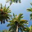 Stock Photo: Palm frond on sky