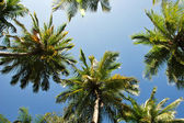 Palm frond on the sky — Stock Photo