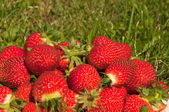 Strawberry on the grass — Stock Photo