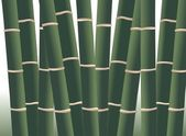 Bamboo forest — Photo