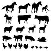 Farm animals - vector — Stock Vector