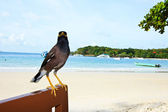 Greedily Bird — Stock Photo