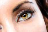 The macro female eye — Stock Photo