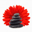 Royalty-Free Stock Photo: Red flower black stones
