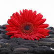Red flower black stones - Stock Photo