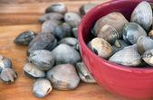 Czerwony bowl z żywymi małżami — Zdjęcie stockowe