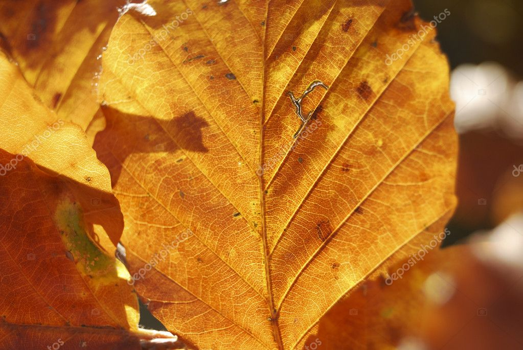 Golden Leaf in october — Stock Photo #3332973
