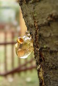 Resin on the fruit tree — Stock Photo
