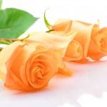 Three laying orange roses — Stock Photo #3337534
