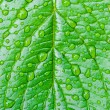 Green leaf with dew drops — Stock Photo