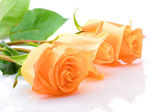 Three laying orange roses — Stock Photo