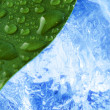Green wet leaf with ice — Stock Photo