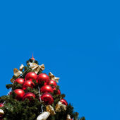 Fur tree with blue sky — Stock Photo