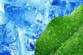 Green leaf with blue ice — Stock Photo