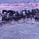 Morning spring ice — Stock Photo #3450662