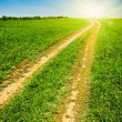 Stock Photo: Country road to the sun