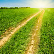 Country road to the sun — Stock Photo
