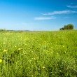 Stock Photo: Field with yellow flowers
