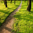 Path in the morning park — Stock Photo