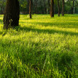 Morning shadows on the grass — Stock Photo