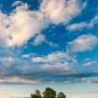 Three trees under the sky — Stock Photo