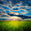 Beautiful sunset in meadow — Stock Photo