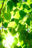 Sun shining over the tree crone — Stock Photo