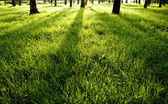 Shadows on green wet morning grass — Stock Photo