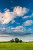 Three trees under the sky — Stock Photo