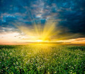 Sunset in the field — Stock Photo