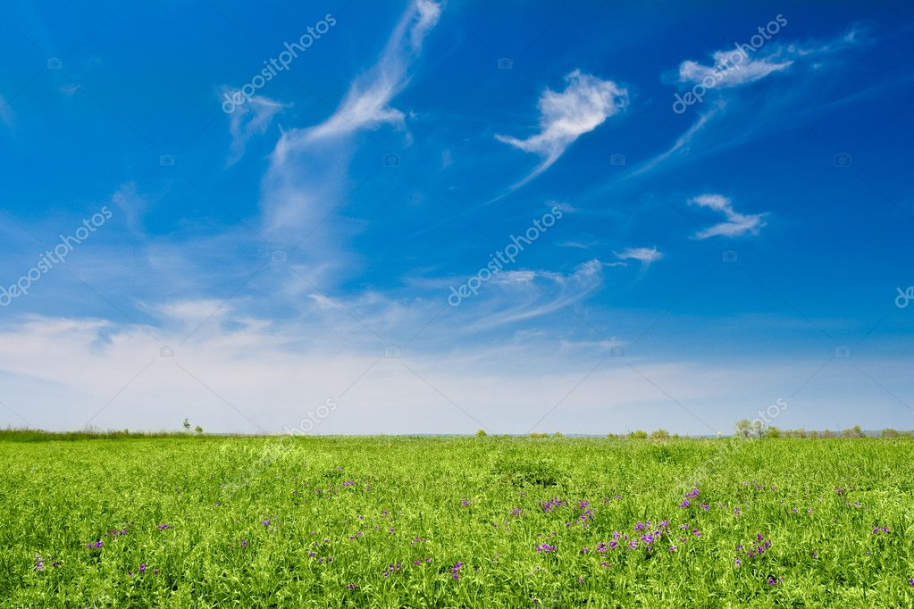 Field with flowers and blue skies with clouds  Stock Photo #3450771