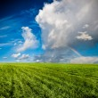 Stock Photo: Blue skies above green field
