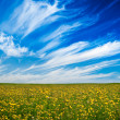 Yellow field — Stockfoto