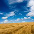 Stock Photo: Golden plain under blue skies