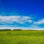 Wild nature panorama — Stock Photo