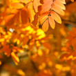 Closeup autumn yellow foliage — Stock Photo