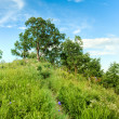 Oak trees on the hill — Stock Photo