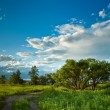 Evening summer landscape — Stock Photo