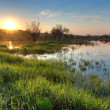 Spring sunset landscape — Stock Photo