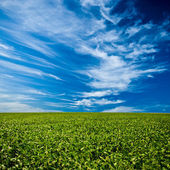 Green field under blue skies — Stock Photo