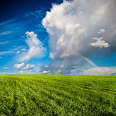 Blue skies above green field — Stock Photo