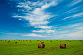 Field with hay stacks — Stock Photo
