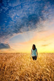 Woman in wheat field walking to sunset — ストック写真