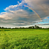 Rainbow above the forest — Stock Photo